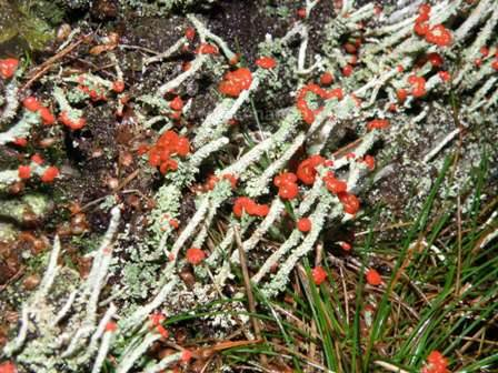 Lichen in the Algarve