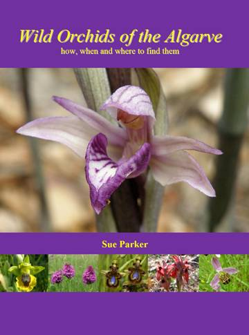 Wild Orchids of the Algarve - how, when and where to find them, by Sue Parker
