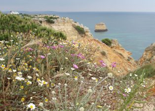 Wildflowers on the clifftops